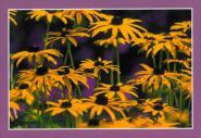Grußkarten-Kassette - Sommerblumen
